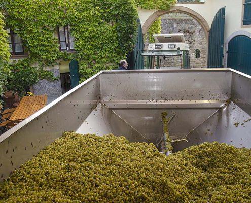 Mit einer Metallschnecke wird die Ernte über einen dicken Schlauch in den Tank befördert.